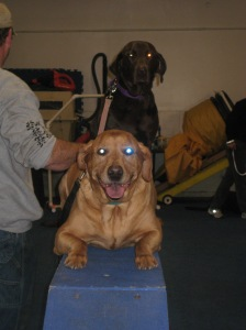 Sampson and Delilah