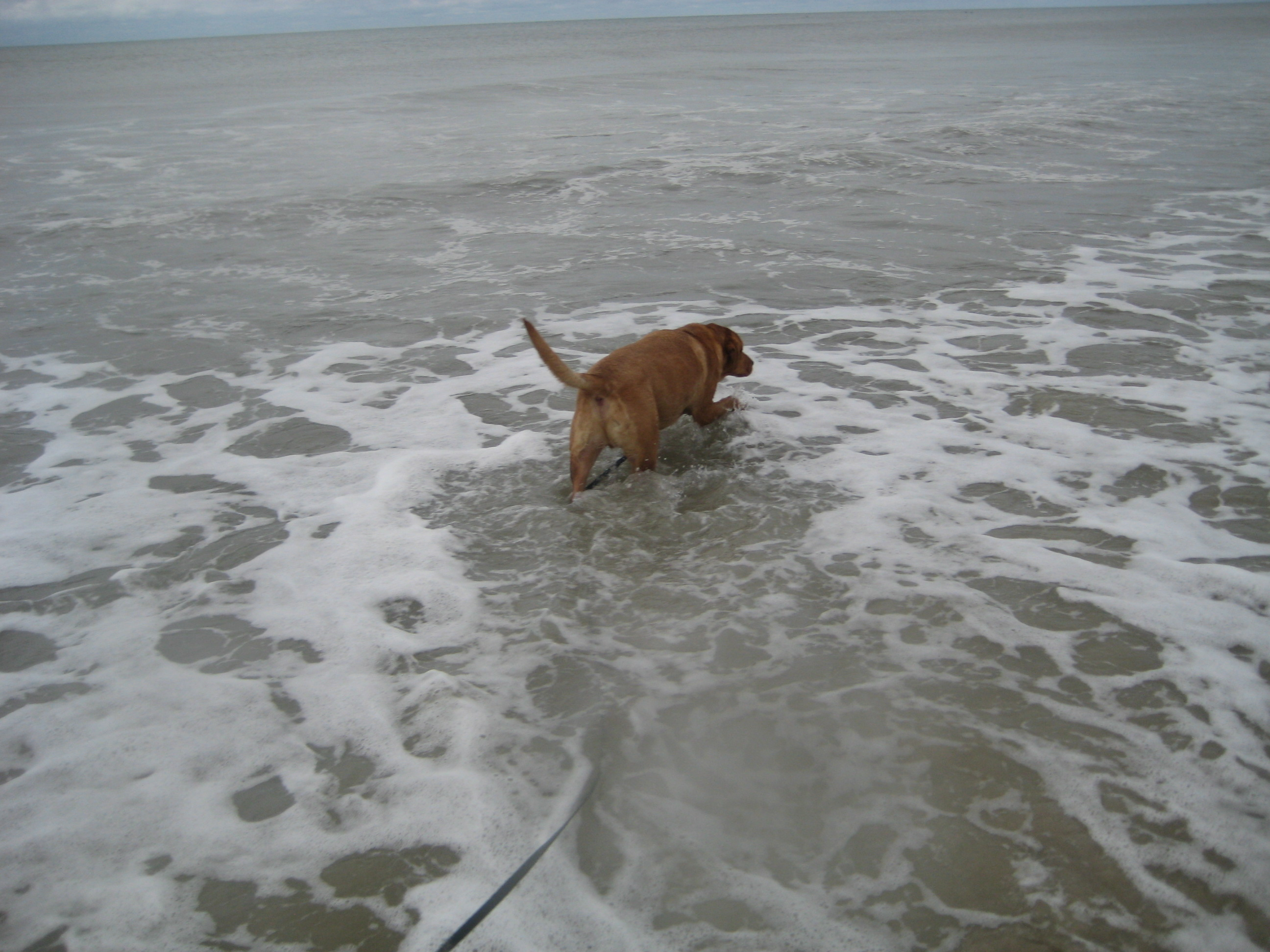 Image Result For Dog Obedience